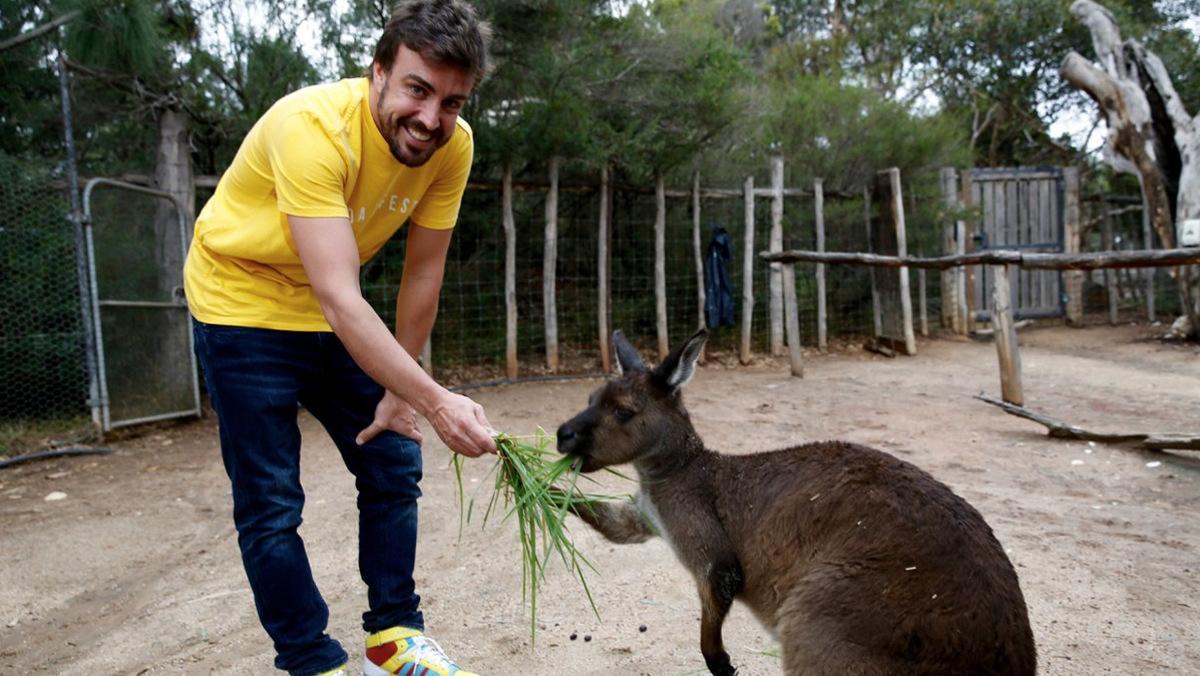 Fernando Alonso y un canguro del Zoo de Melbourne