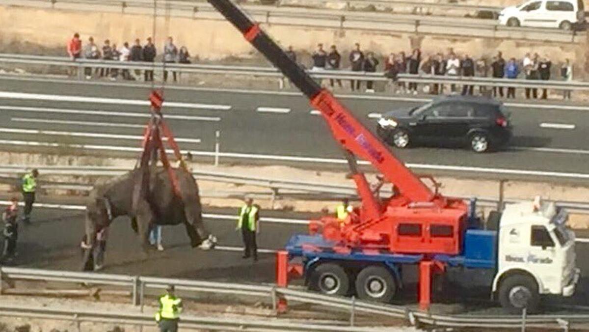 Rescate elefante Albacete