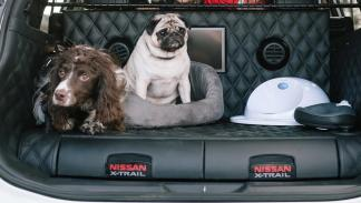 Nissan X-Trail 4Dogs Concept (II)