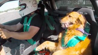 Jett, el perro amante del drifting