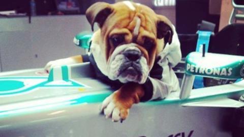 Roscoe es un gran piloto
