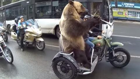 Cómo hacer el oso en medio del tráfico
