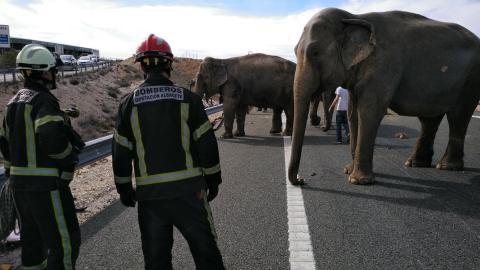Elefantes en la carretera albaceteña