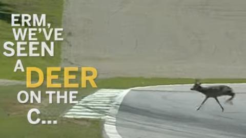 GP Austria F1 2001, Montoya y un ciervo
