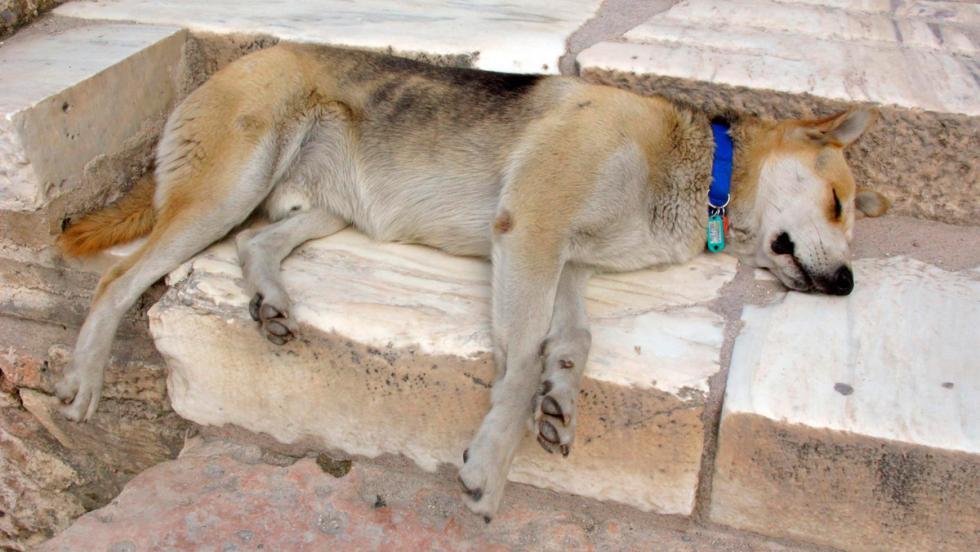 Dog leg (pata de perro)