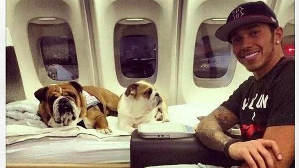 Coco y Roscoe en el jet privado de Hamilton
