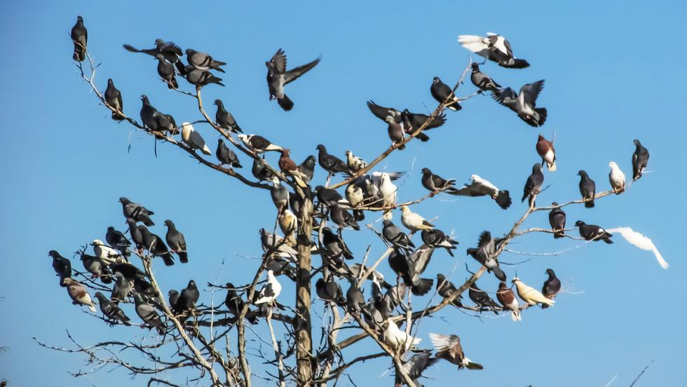 Los peligros de que tu coche duerma en la calle - Los pájaros... los malditos pájaros
