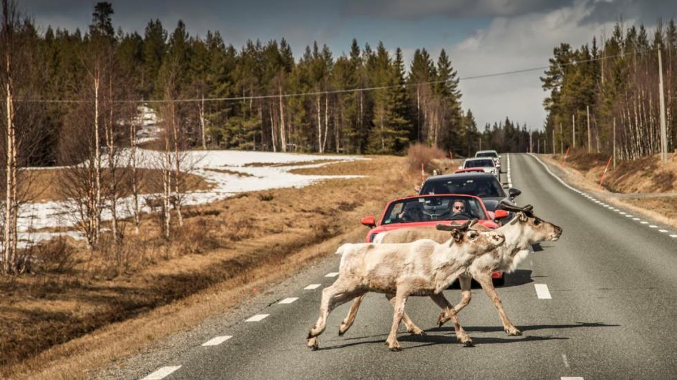 En Escandinavia hay que conducir con mucho ojo