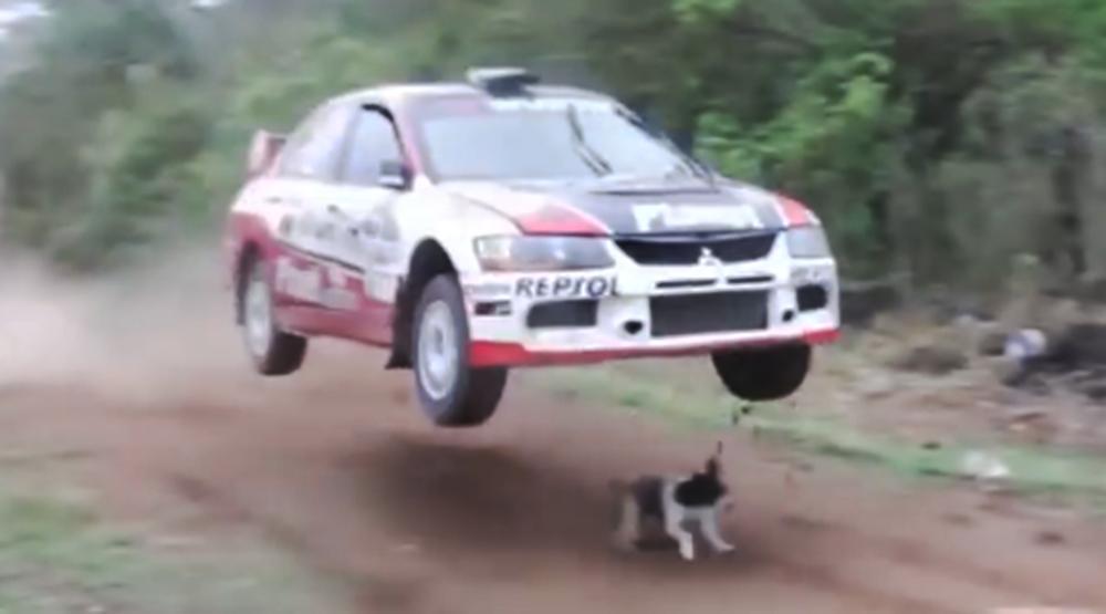 El perro con más suerte del mundo...