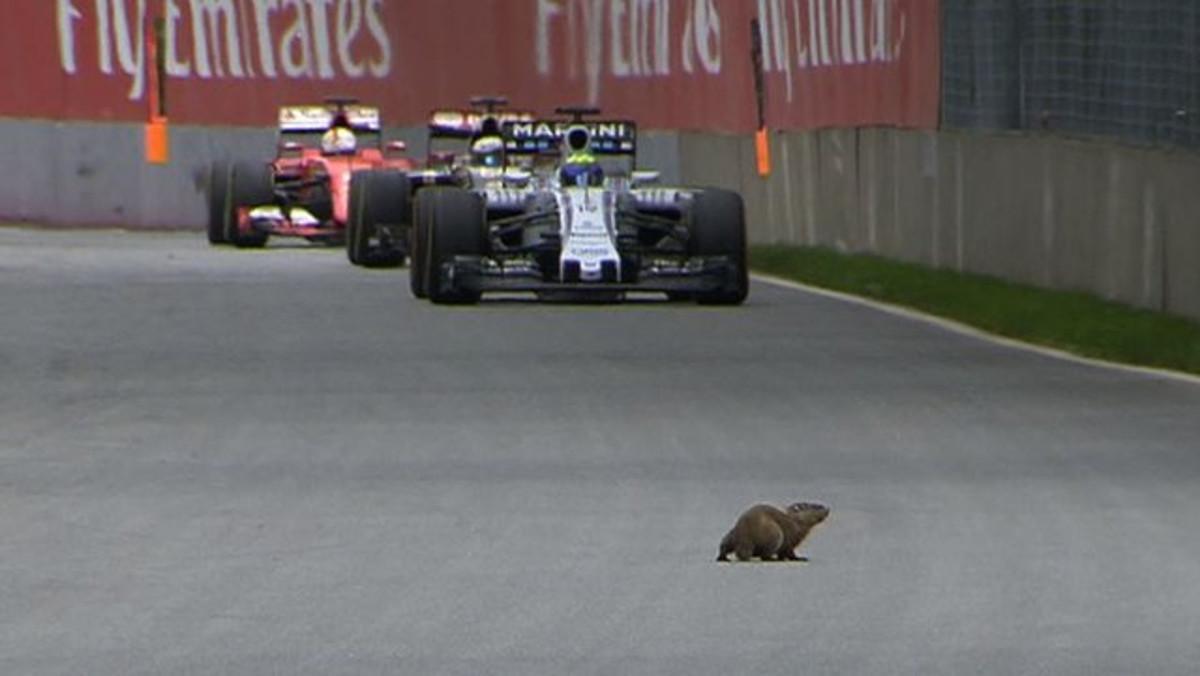 Las alucinantes invasiones de animales en la F1