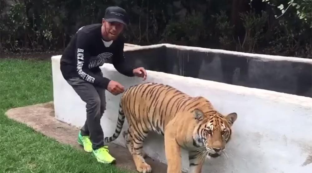 Lewis Hamilton asustando a un gatito...