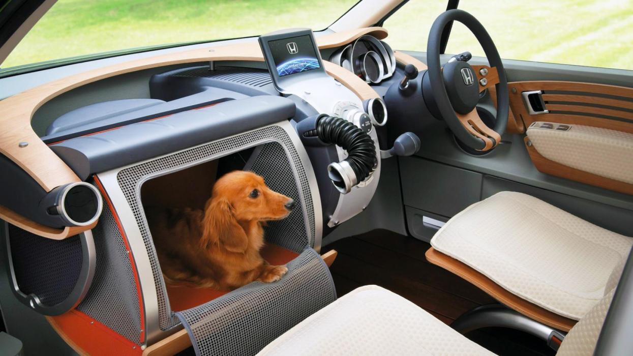 Honda WOW mascotas lujo coche perros
