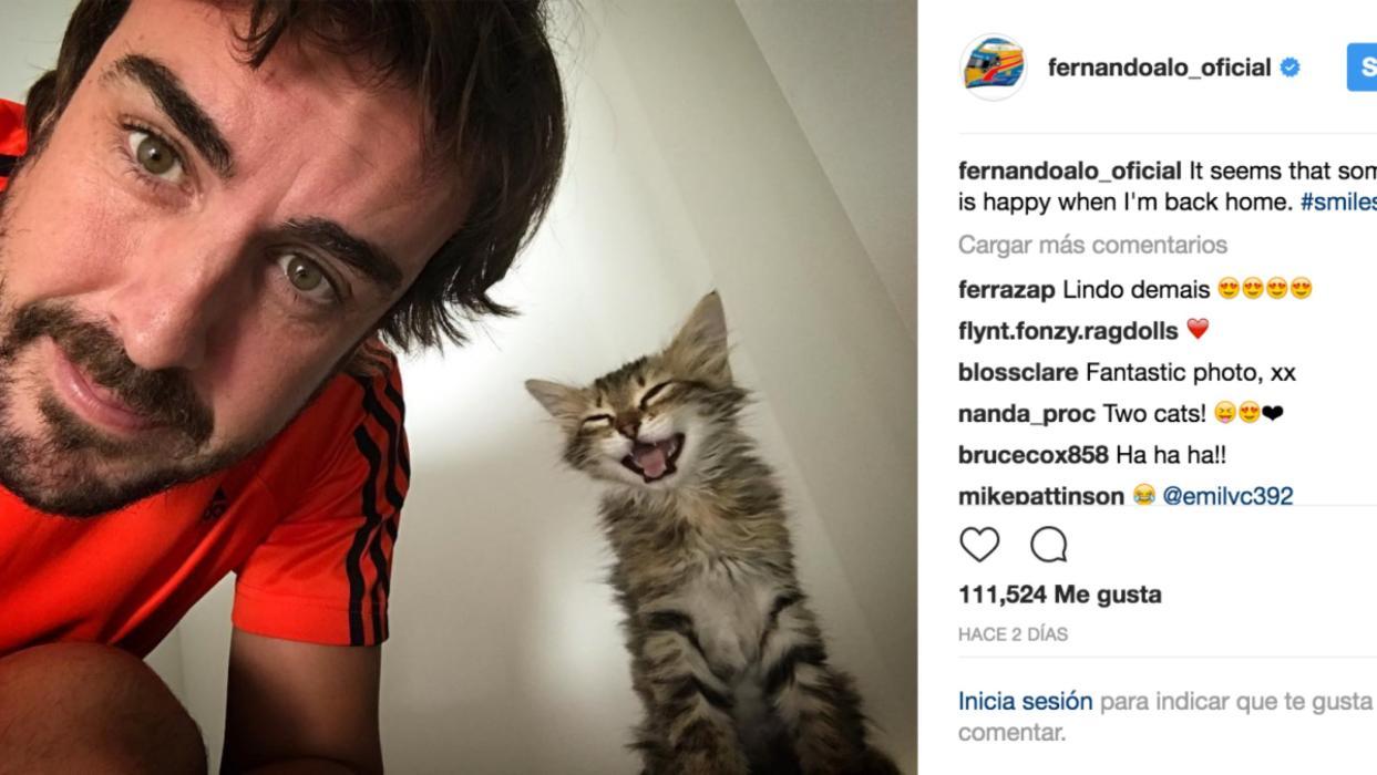 El gato de Fernando Alonso