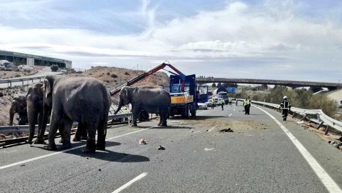 Elefantes de paseo por Albacete